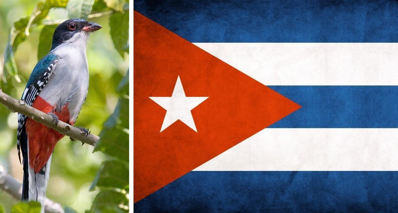 19599a53445a Кубинская вечеринка — веселье в стиле Румбы